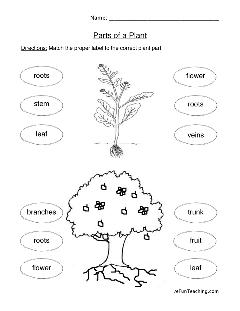 Plant Parts We Eat Worksheet • Have Fun Teaching