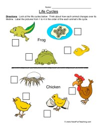 Life Cycle Worksheets   Have Fun Teaching