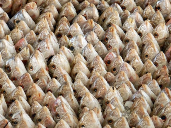 A display of fish for sale in the market in Gabes, Tunisia.