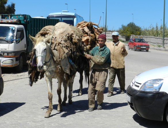A horse loaded with hides for the tannery in Fes, Morocco.