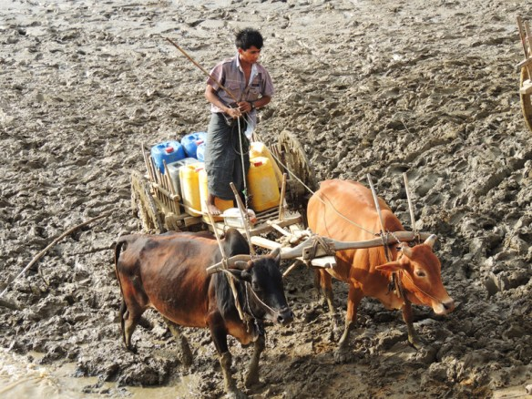 Bullock cart collecting water from the Irrawaddy near Gwechaung hill, Myanmar.