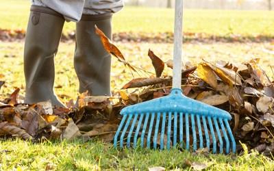 Hvorfor skal visne blade fjernes fra græsplænen?