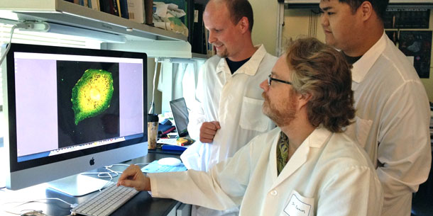 Mutation Makes Anti-cancer Protein A Tumor Booster