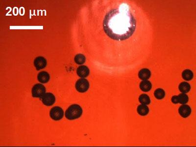 The University of Hawaiʻi microrobot assembled tiny glass beads into a mini UH.