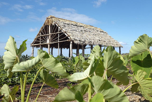 Sustainable Community Food Systems Program Awarded ʻĀina Ulu grant