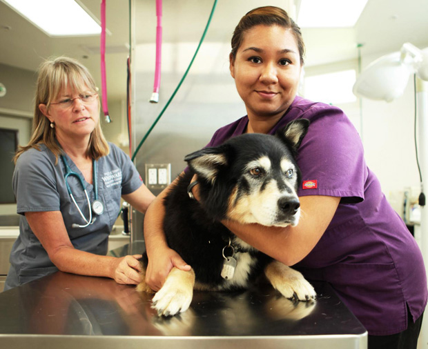 Vet Assisting Program Expands To Maui In Spring 2016 University Of