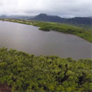 Hawaiian fishpond