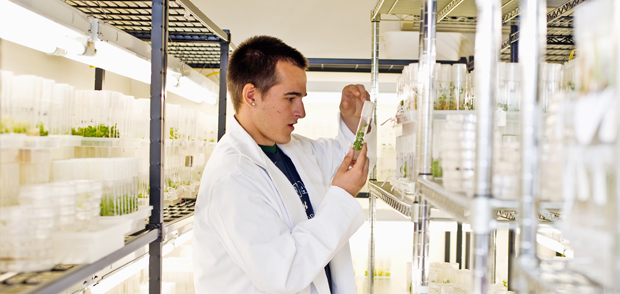 Researcher in the plant lab