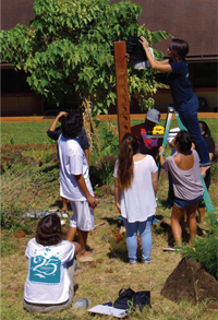 Students investigating a tree