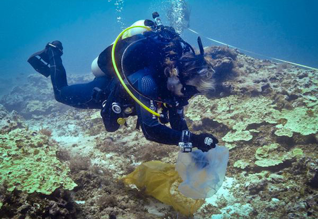 Researcher collecting samples underwater