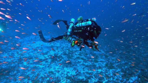 Manoa Soest Deep Coral Study Diver Fish F