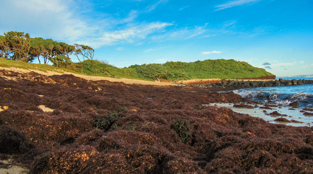 UH Researchers Link Quality Of Coastal Groundwater With Reef Degradation On Maui