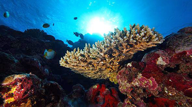 Live Streaming Exploration Of Deepwater Areas Of Samoa