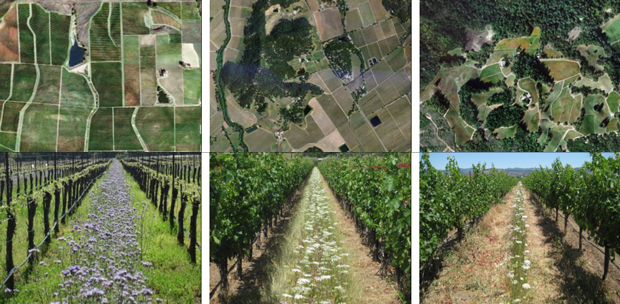 Landscapes from wine vineyards in California