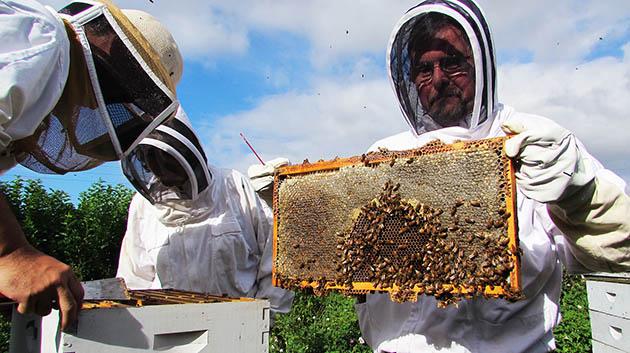 UH Honeybee Project Keeps Hawaiʻi Beekeeping Buzzing