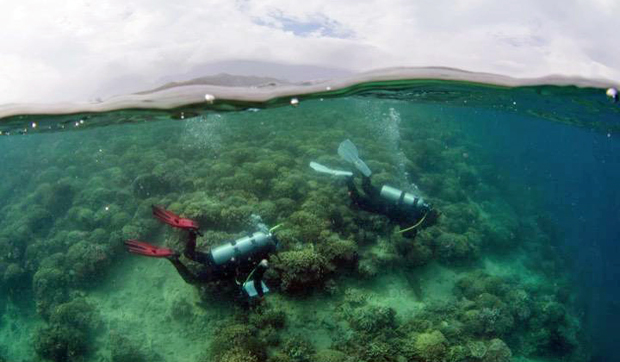 Two People Examining Coral Reef