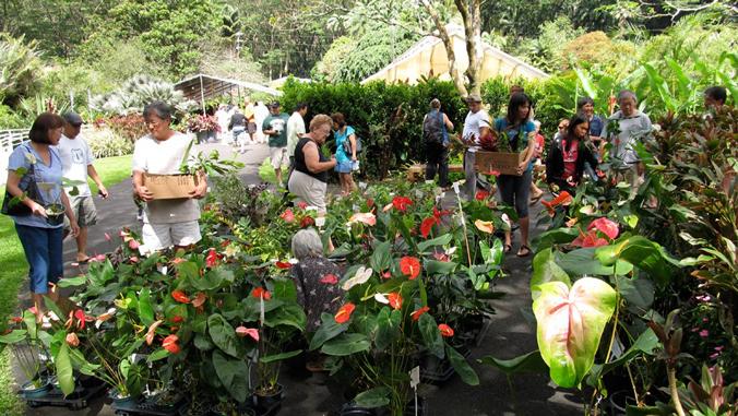 Community members buying plants