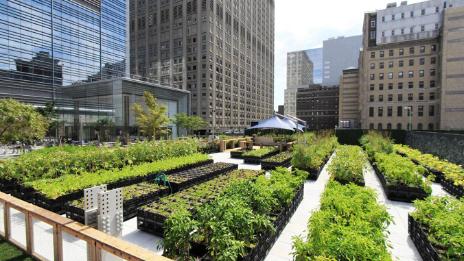 Example of urban agriculture