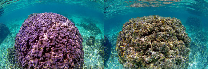Researchers Create First Map Showing Human And Environmental Impact On Hawai'i Reefs