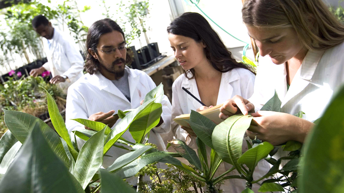U H Manoa students examining plants in a lab