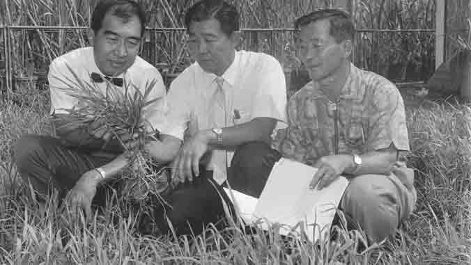 three men examining grass