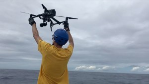 Stunning drone videos of humpback and gray whales aid new UH marine mammal research