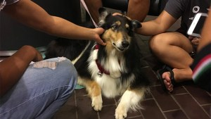 Therapy dog getting pets