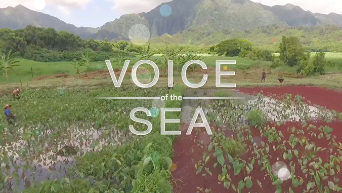 Graphic that says Voice of the Sea, with kalo and a mountain in the background