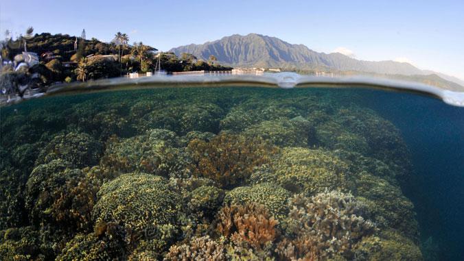 View of coral reef in ocean.