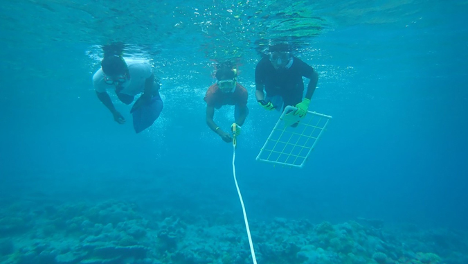3 people diving in the ocean in the Marshall Islands
