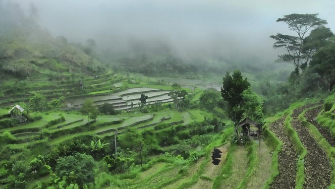 Rain and clouds over rice fields