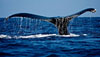whale-bug