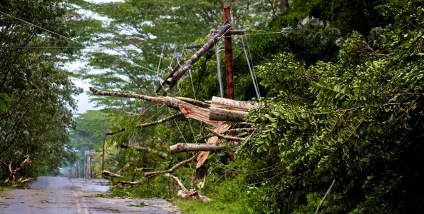 Trees toppled by Tropical Storm Iselle crashed onto utility lines and snapped poles in Hawaiian Paradise Park early Friday morning, August 8, 2014. Here trees alongside Makuu Drive crashed down. Photo by Baron Sekiya   Hawaii 24/7