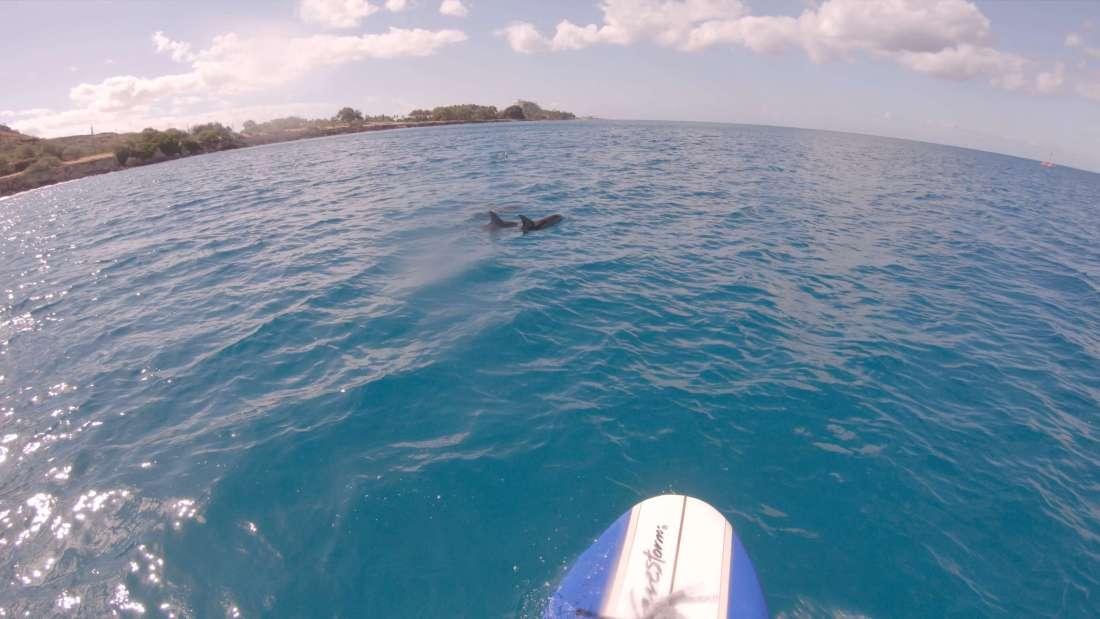 ハワイで大家:SUPでイルカと並走最高!