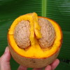 Mammee Apple split open in Hawaii Permaculture farm