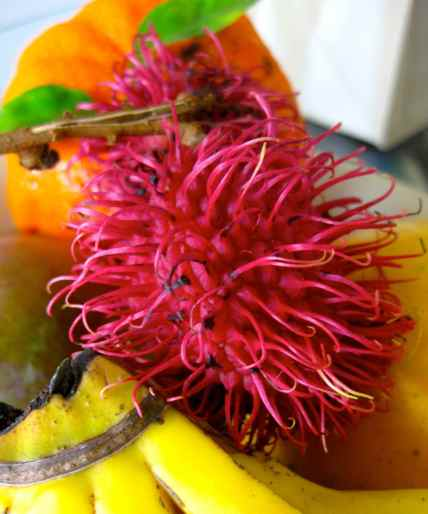 Tropical Fruit from Kauai farmers market