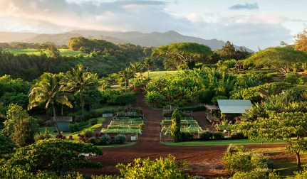 Kauai Organic Farms - Aerial view of beautiful farm set up
