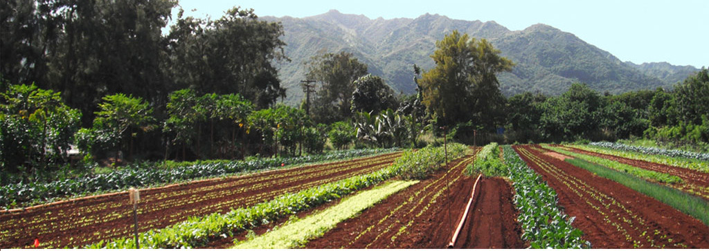world wide opportunities on organic farms hawaii