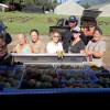 Master Gardens Around Food - Kauai