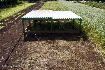Joe Salatin-style chicken tractor at the Parziale farm in Moloa'a, Kaua'i.