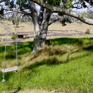 Trees and swing, old cabin in background