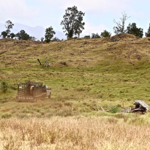 Hill in pasture