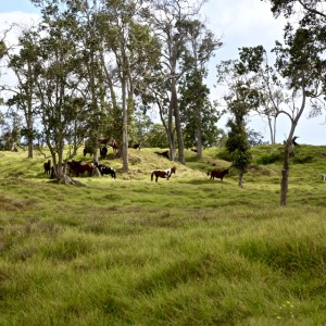 Horses with tall grass and trees