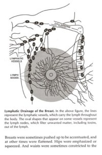 a_breasts_lymphsystem