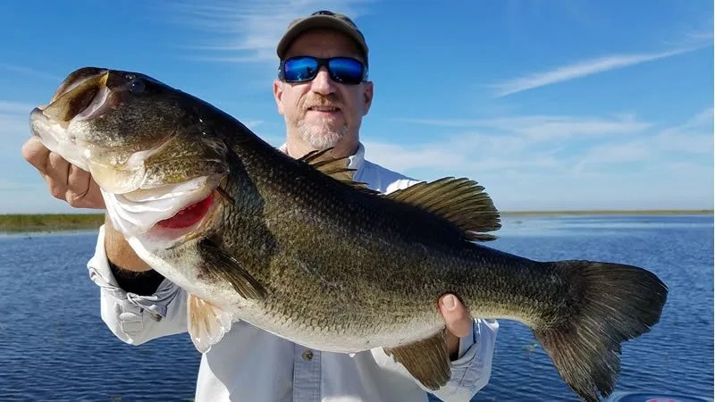 Strictly Artificial Bass Fishing