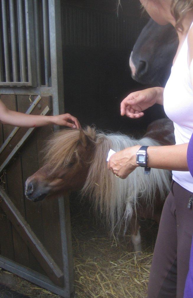 Fuzzy Pony at Olympic Dressage Barn