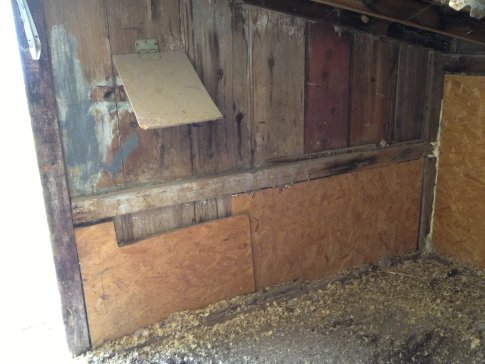 This large, open wall facing the horse barn was the spot I picked to install my nesting boxes