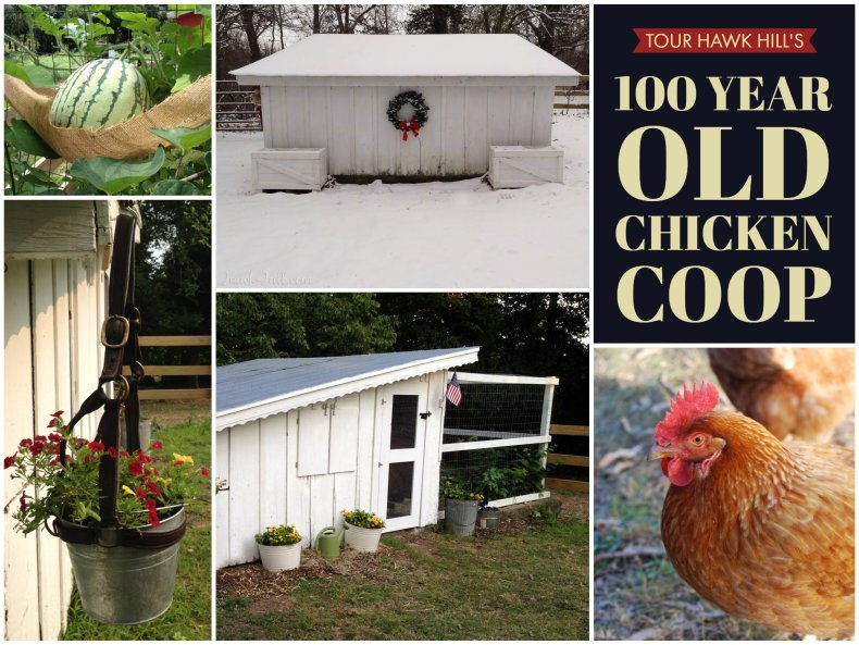 100 Year Old Chicken Coop Tour