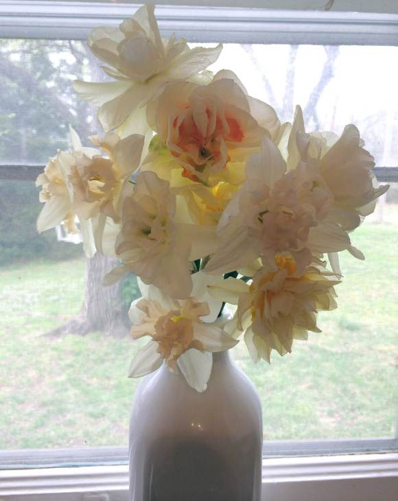 Bouquet of White Double Daffodils.