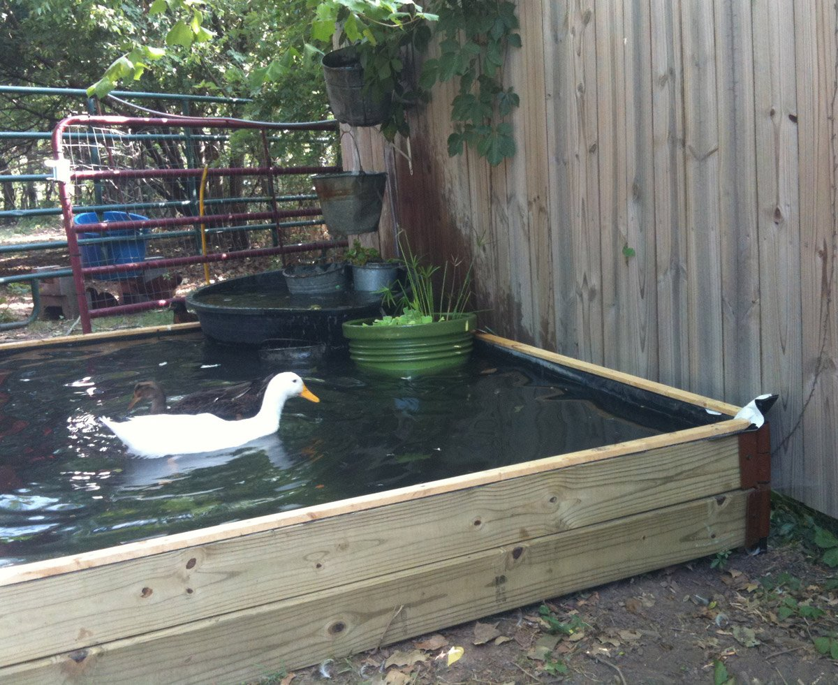 Backyard Duck Ponds how to build a no-dig backyard pond for under $70 - hawk hill